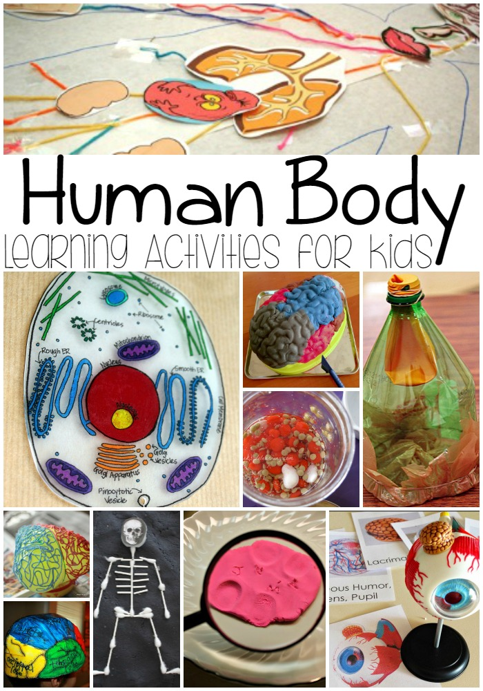 Human Body Learning Activities for Kids - Connecticut After